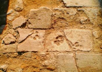 Padlótéglák a miskolc-szentléleki pálos kolostorból. Fotó: Verebes Adrienn (homregeszet.hu)
