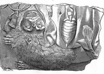 A XV. századi sírkő-töredék a téglagyári romok területéről (Rajz: toriblog.blog.hu)